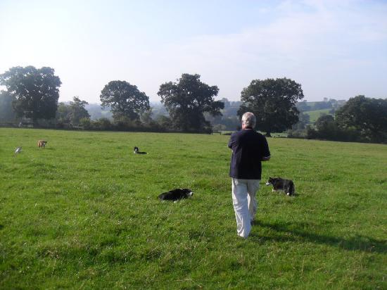 Yellingham Farm: Walking the dogs in the fields