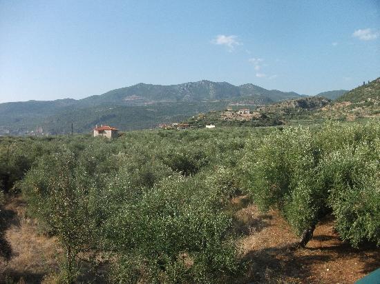 Palataki Villas Holiday Resort: Olive Groves surrounding Villa