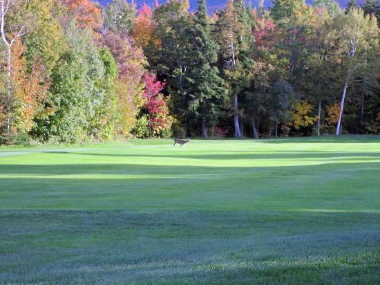 Sugarloaf Mountain: Golf Course