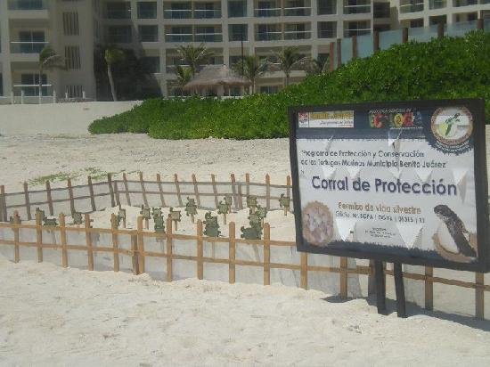 The Westin Lagunamar Ocean Resort Villas & Spa, Cancun: Turtle nursery