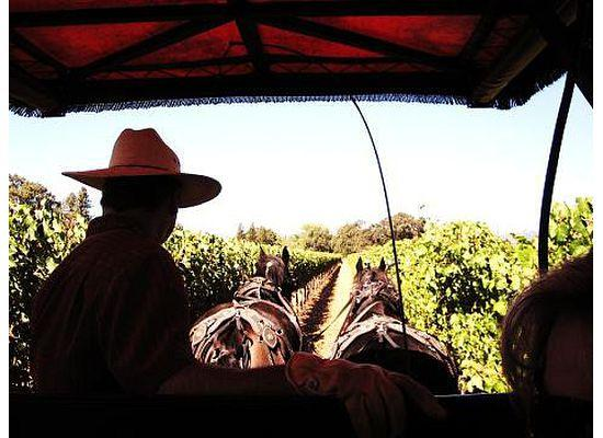 The Wine Carriage: Napa Carriage Tour