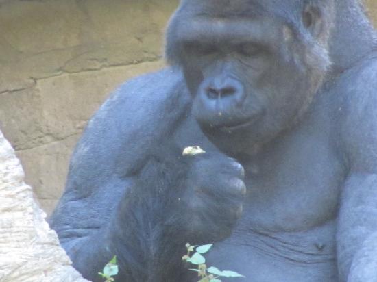 Memphis Zoo: enjoying a snack