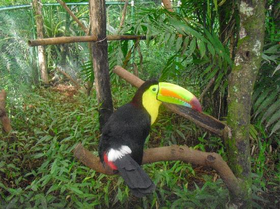 World of Snakes: A Toucan will greet you on the entrance
