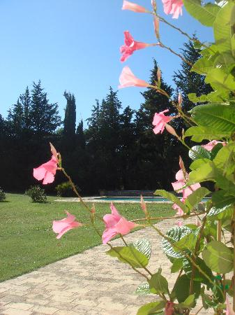 Domaine de Saint-Clement : September garden
