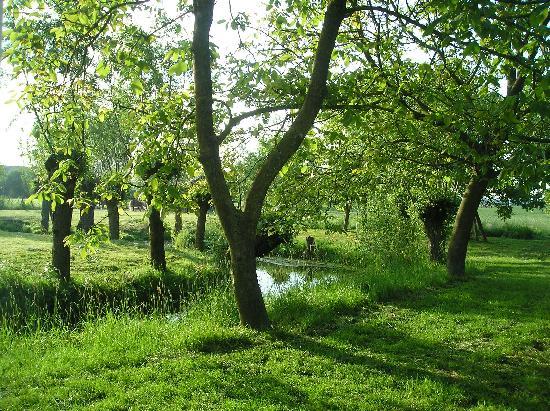 Onder den Peerenboom: Garden