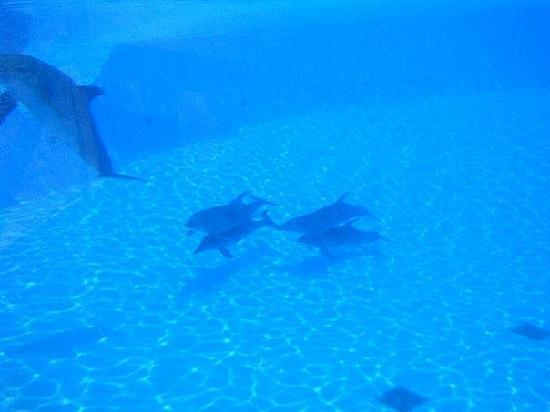 ClubHotel Riu Costa del Sol: dolphins