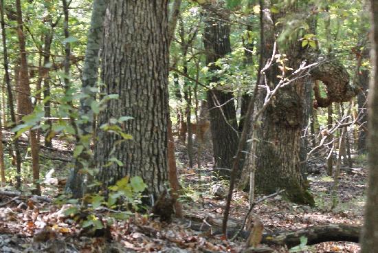 Pivot Rock and Natural Bridge: Deer!