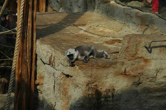 Zoom Erlebniswelt: kleiner Affe