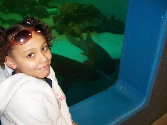 Clearwater Marine Aquarium: In front of the shark tank