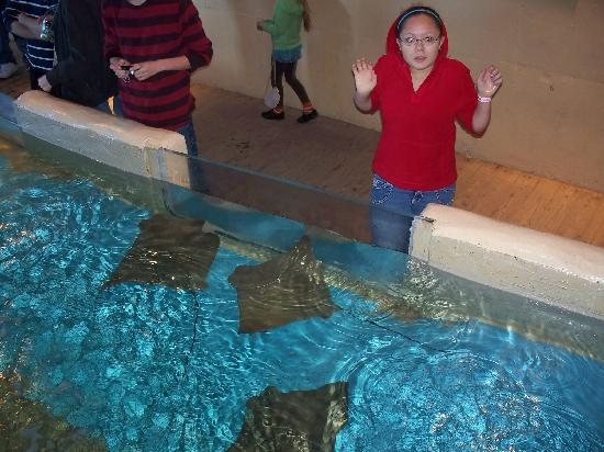 Clearwater Marine Aquarium: Petting the sting rays