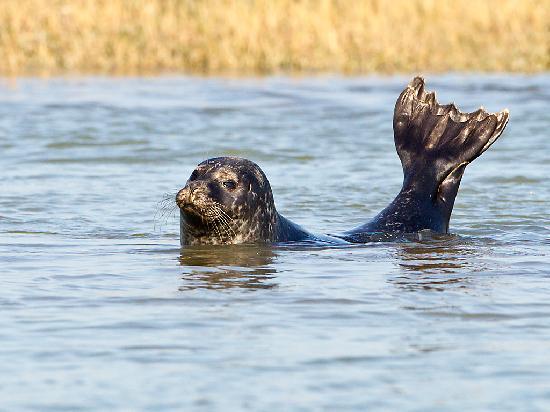 Dover Sea Safari: Taking it easy