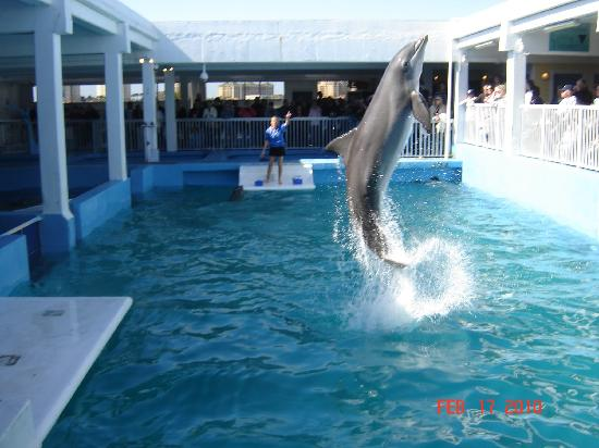 Dolphin Picture Of Clearwater Marine Aquarium