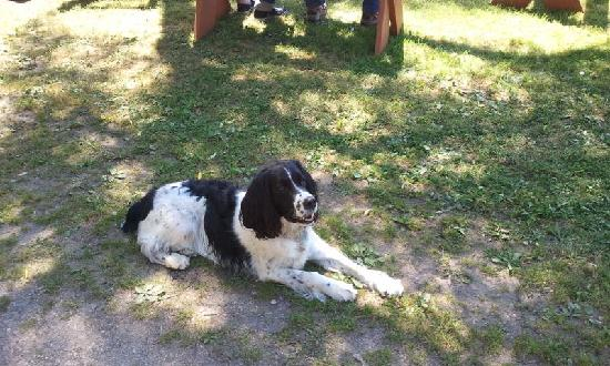 The Retreat at Miller's Landing : Gotta love Bailey, the Retreat dog!