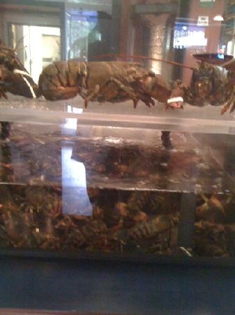 Billy's Seafood Co : live lobsters