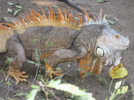 Iguanario Archundia