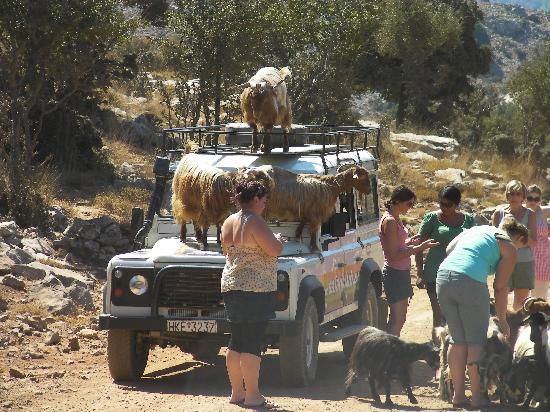 Safari Club Crete: Stop off at Goat Valley