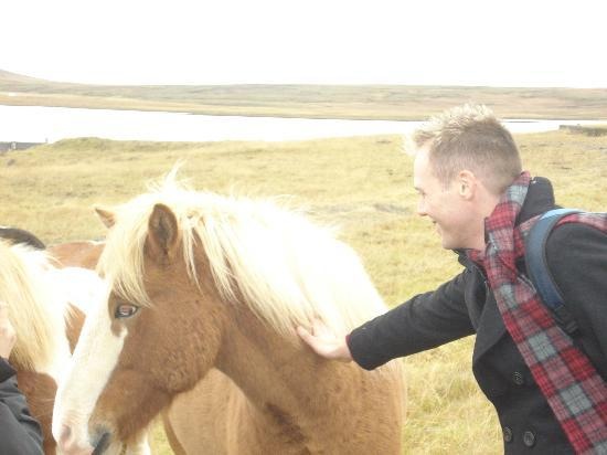 Iceland Guided Tours: stunning horses!