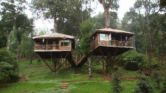 Shola Periyar Tree House照片
