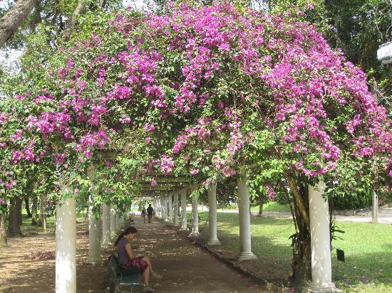 gorgeous-arbor-at-jardim.jpg