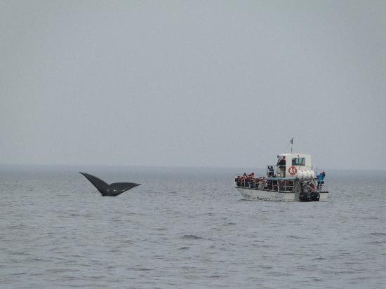 Las Restingas Hotel de Mar: avistaje de ballenas