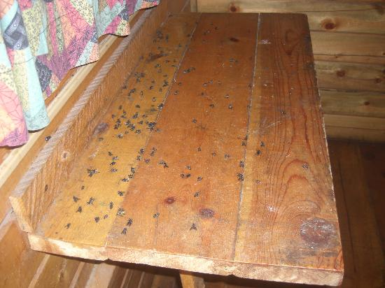 "Mount Rushmore KOA at Palmer Gulch Resort: fresh dead flies on table 3 hours after it was ""cleaned"""