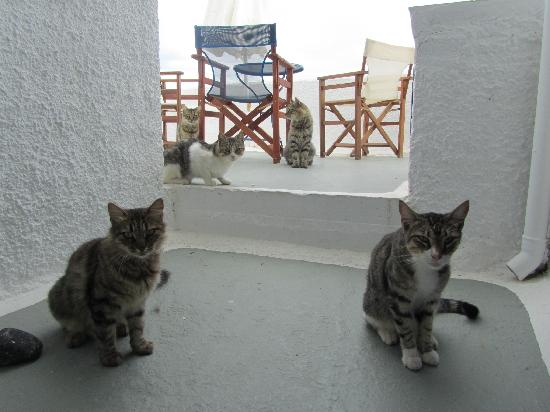 Casa Sofia : The cats who came to visit every day
