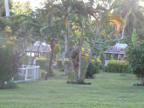 To Sua Ocean Trench: Samoan fale
