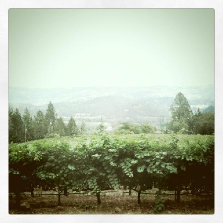 Holme Grown Tours: View from Frias Family Vineyards