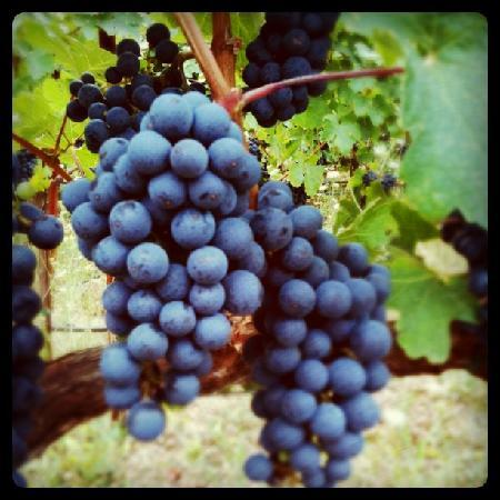 Holme Grown Tours: Cabernet