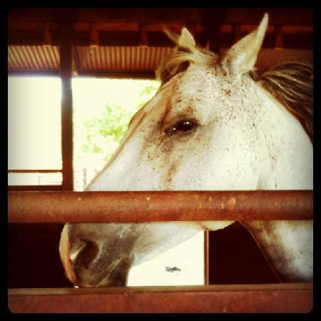Holme Grown Tours: Horse at Tamber Bey Vineyards