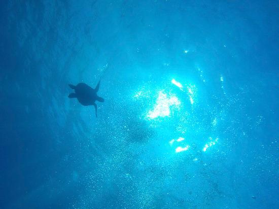 Blue Marlin Dive - Gili Trawangan: you can see this