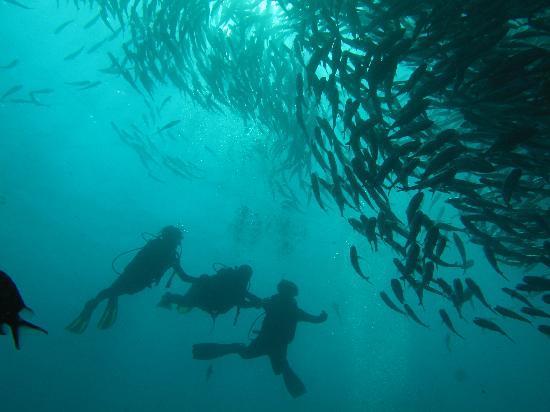Sanur, Indonesia: 友達と一緒に初のダイビング!