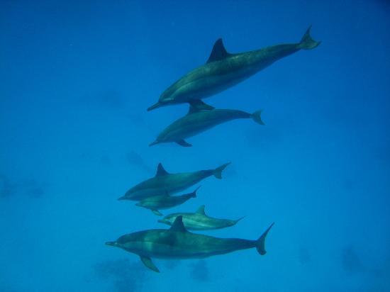 dolphin house reef shaab samadai bagno con i delfini