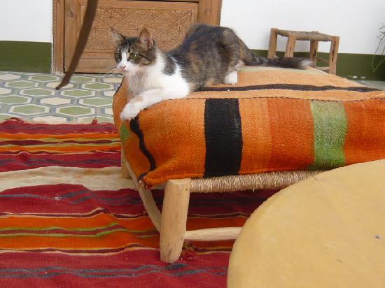 Lost in Marrakech : お店にいたネコ