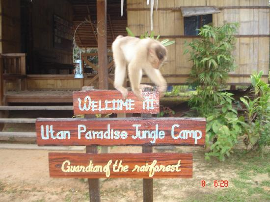 Utan Paradise Jungle Camp: a visitor from the jungle