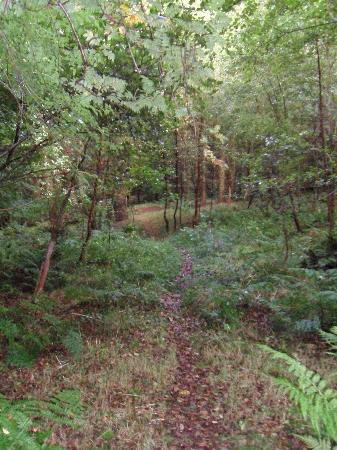 Woodside of Glasslaw Guest House: Woods to walk in