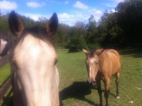 WhistleWood Farm Bed and Breakfast: WhistleWood resident horses