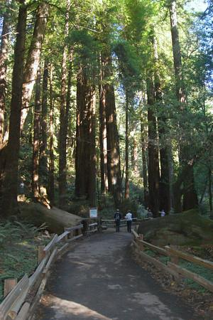 Muir Woods National Monument: main trail