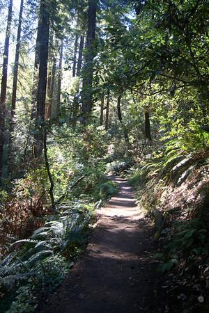 Muir Woods National Monument: hillside trail spur