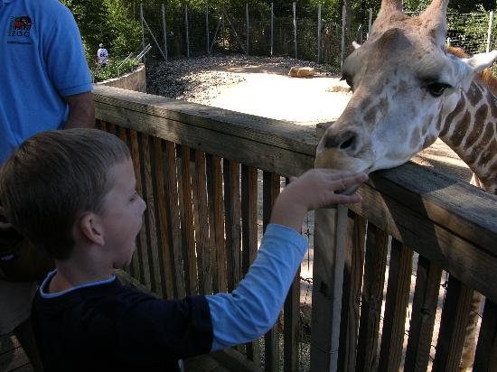 Birmingham, AL: Feeding the giraffe