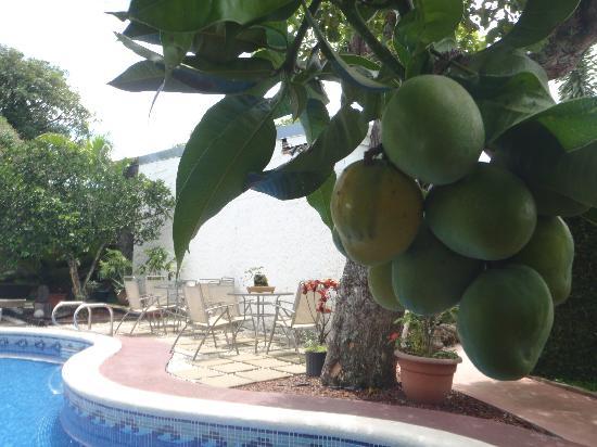 Hotel Mi Tierra: Mango and Swimming pool