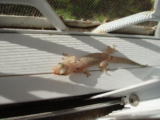 Airport Motel - Tiare Village: gecko