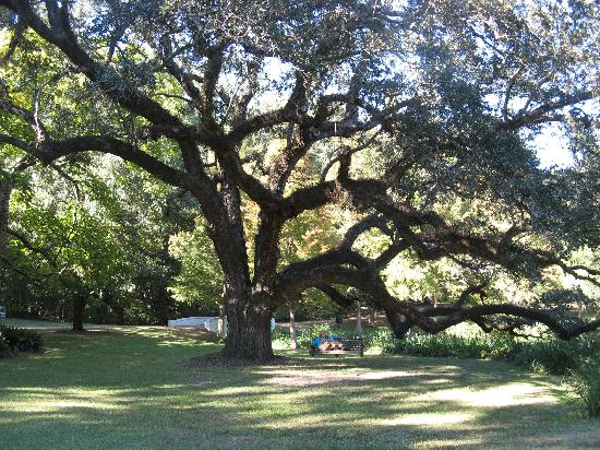 Brandon Hall Plantation: 48 acres of gorgeous old trees