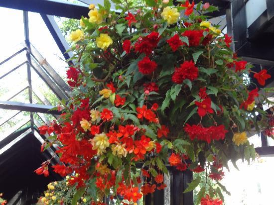 Olympic Plaza: Hanging flower basket