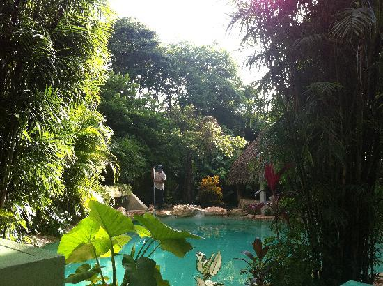 Genesis Eco-Oasis: The morning view of the pool from outside of the room