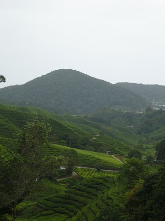 ‪Boh Tea Plantation‬