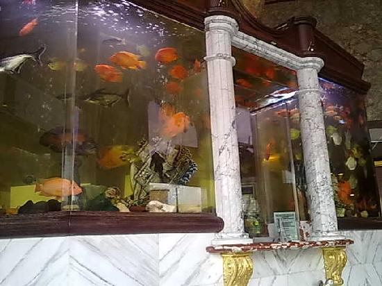Paris Suites Hotel : Aquariums reception