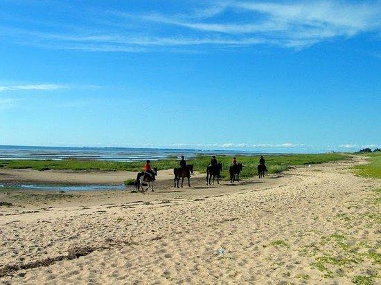 Reiterhof am Meer: Ein Highlight für Alt und Jung - Reiten am Strand