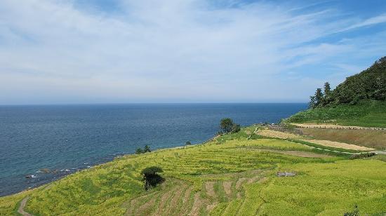 Shiroyone Semmaida : 輪島の棚田