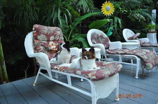 Ambrosia Key West Tropical Lodging: Panda & Koty enjoying their stay too